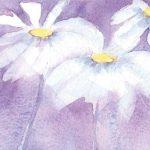 daisies and sunbeams