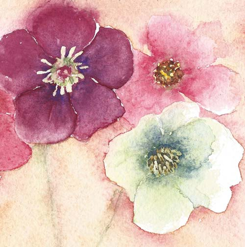 hellebores flower painting