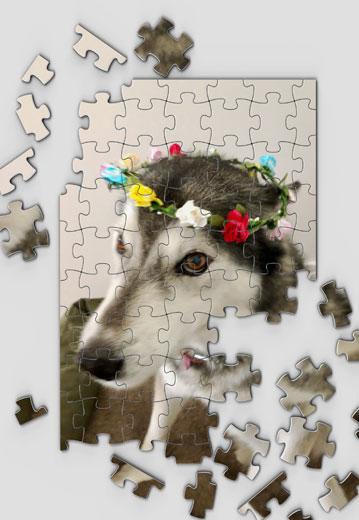 husky jigsaw puzzle