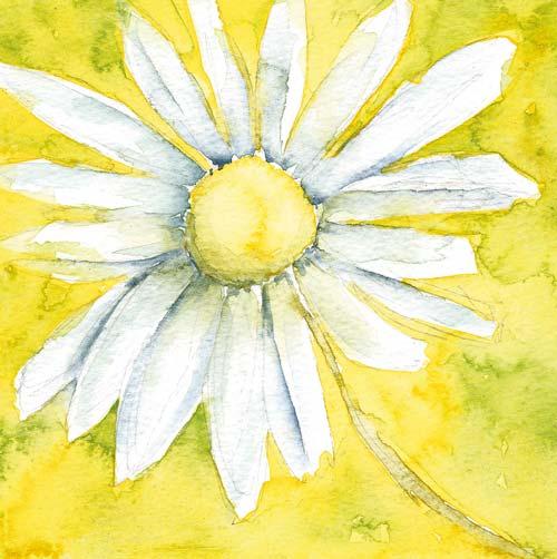 daisy flower painting card