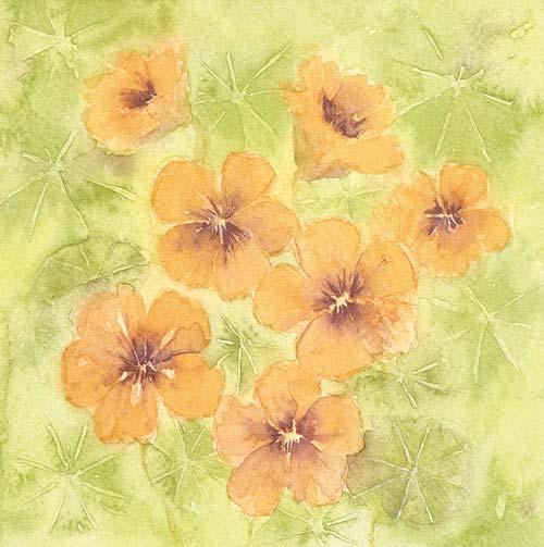 nasturtium flower painting