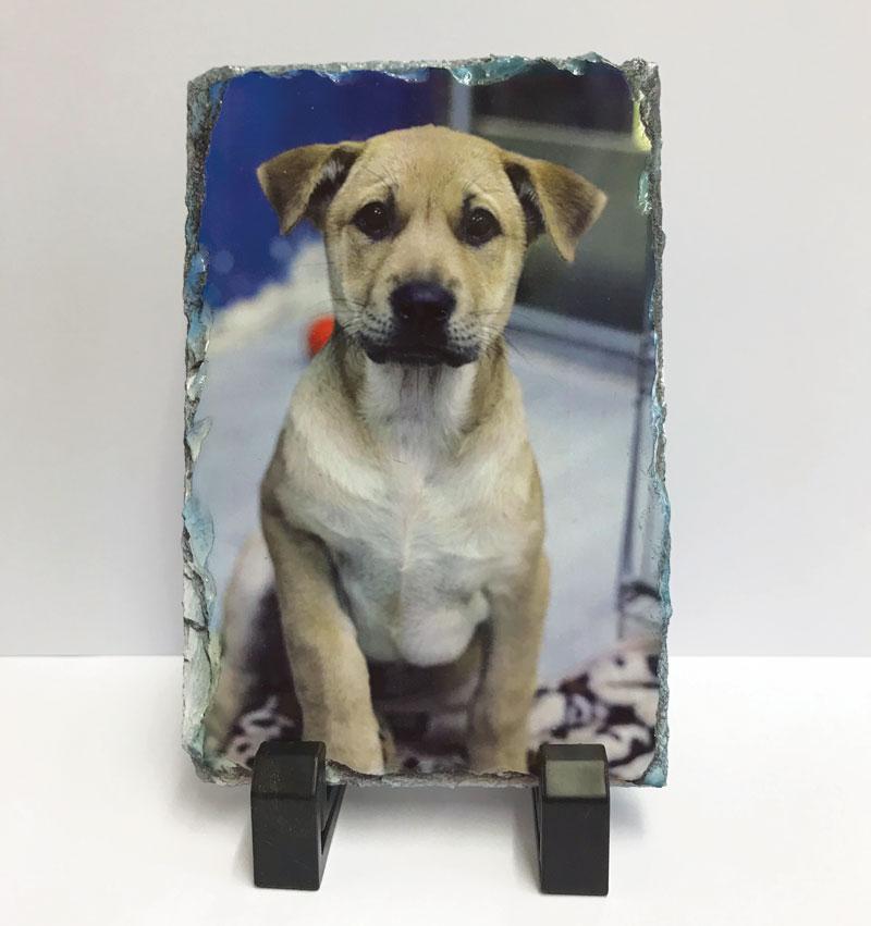 dog photo printed on slate